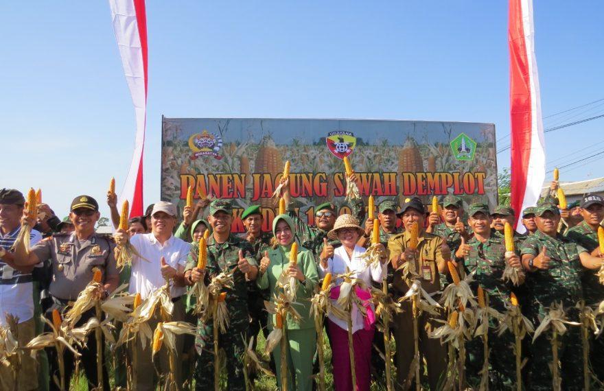 Kodim Tabanan Panen Jagung Sawah Demplot/fajarbadung.com