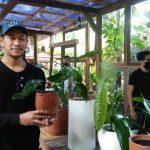 Dukung Industri Kreatif, Bali Houseplant Community Gelar Gelar Pameran Tanaman Hias/fajarbadung.com